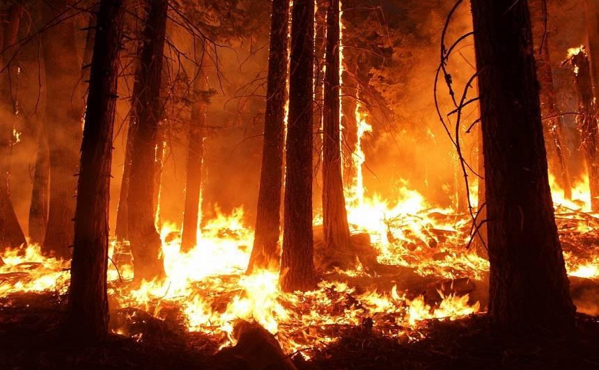 Skumji, bet fakts! <strong>Vakar Lucavsalā ugunsdzēsēji dzēsuši jau pirmo kūlas ugunsgrēku</strong>