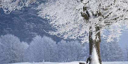 Pētījums: Gadsimta vidū ziemas Latvijā <strong>sāksies janvārī un beigsies februārī</strong>