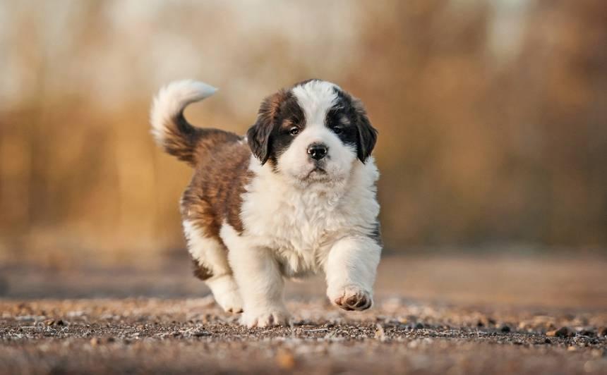 <strong>Te mīļdzīvniekus iegādāties ir droši:</strong> atjaunots šķirnes mājas dzīvnieku audzētāju organizāciju reģistrs