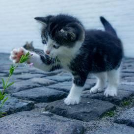 Šogad Valentīndienas svētkos aktuālākie pirkumi internetveikalā — <strong>preces kaķiem</strong>