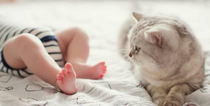 Kaķis un jaundzimušais. <strong>Kā sagatavot mājdzīvnieku bērna ienākšanai ģimenē?</strong>