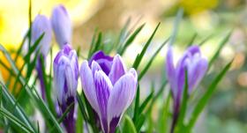 Kurā dienā zvaigznes tev sola veiksmi? <strong>Horoskops no 27. februāra līdz 4. martam</strong>