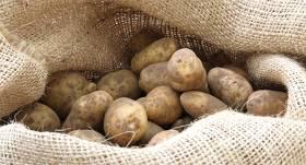 Kur aizrunāt <strong>sēklas kartupeļus?</strong>