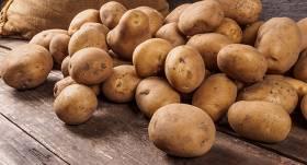<strong>Kādus kartupeļus</strong> stādīsim šogad?
