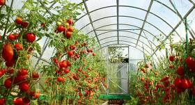 NANO revolūcija dārzā – jauns materiāls, kas palielina ražu siltumnīcās