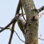 <strong>Kādi putni dzīvo</strong> Latvijas dārzos?