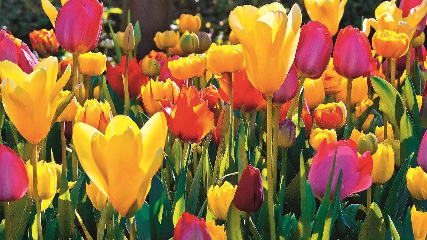 <strong>Tu ziedi</strong> vēl un vēl, un vēl