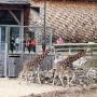 Rīgas zoodārzā 14 gadu vecumā <strong>miris žirafu tēviņš Usmī</strong>