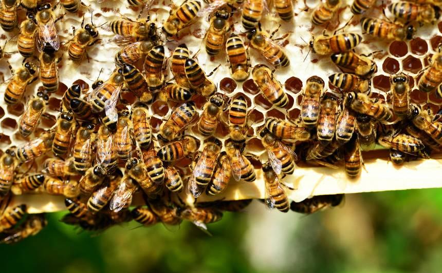 Dailes teātra jumtu sāks apdzīvot <strong>trīs bišu saimes</strong>