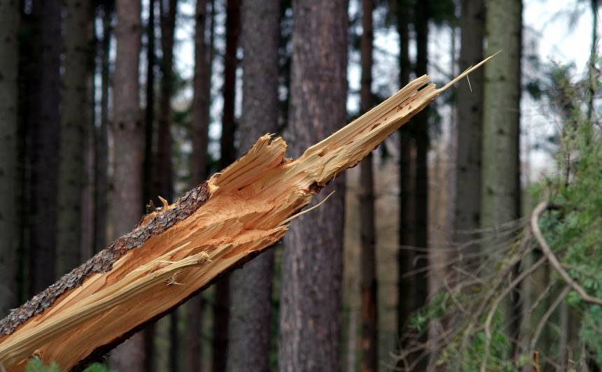 <strong>Siguldā izpostīta atpūtas vieta</strong> netālu no Mednieku namiņa