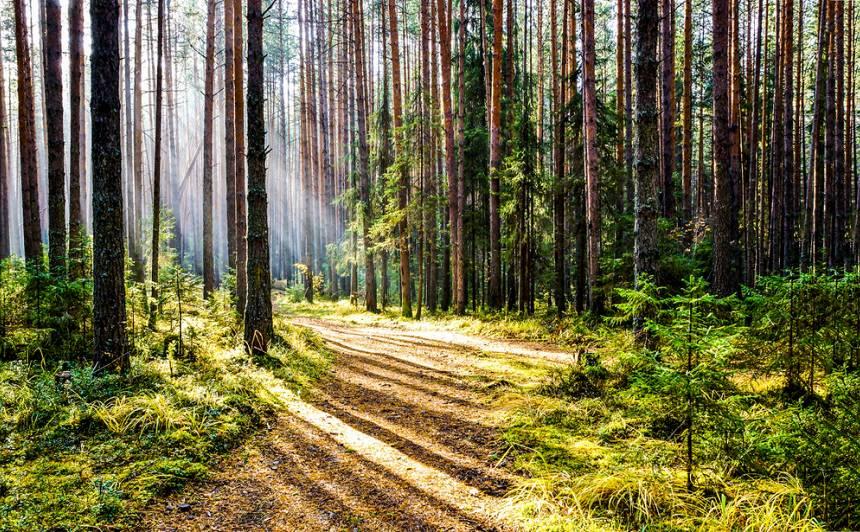 <strong>Pastaiga privātā mežā — </strong> ko drīkst un ko ne?