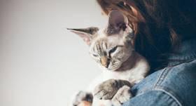 Hipoalerģiskās kaķu šķirnes — <strong>mīts vai patiesība ?</strong>