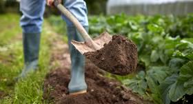 <strong>Izmanto iespēju!</strong> Lauksaimniecībā trūkst darbinieku – saimniecības aicina darbā