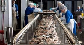 Zivju apstrādes uzņēmums <em>Kaija</em>: <strong>Konservi vienmēr būs topā</strong>