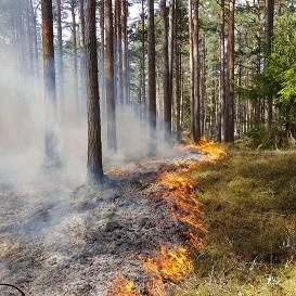 Meža ugunsgrēks Slīteres Nacionālajā parkā