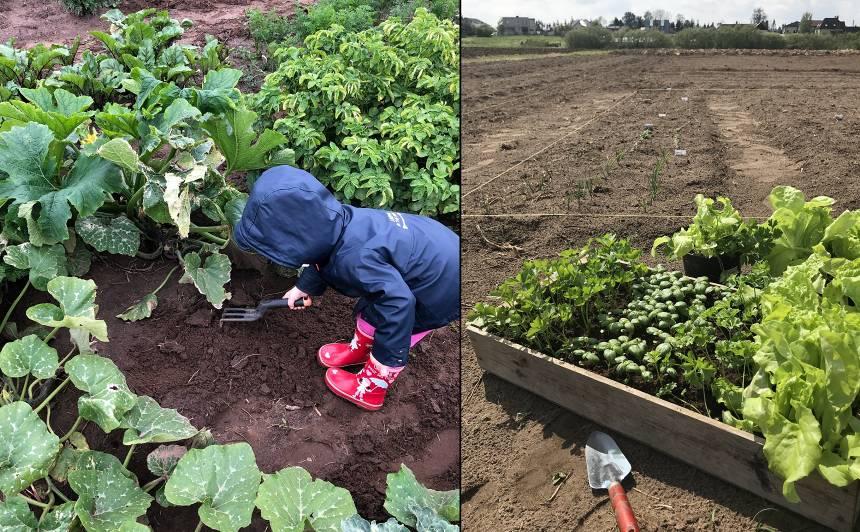 Jauna izklaide pilsētniekiem — <strong>izīrē dārziņus un piedāvā pat tos apkopt</strong>