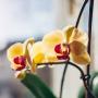 <strong>Glābjam orhideju!</strong> 15 biežākās problēmas un to risinājumi