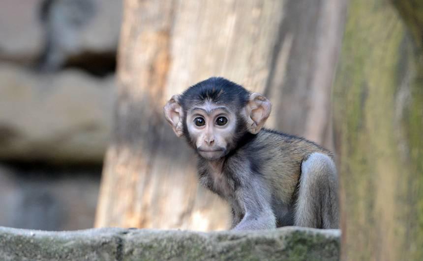 FOTO: Rīgas zoodārzā <strong>klusums, rosīgs pavasaris un mazuļi</strong>