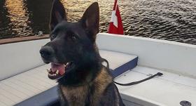 Valsts policijas dienesta suns Vatsons