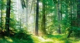 Terapeits, vārdā mežs