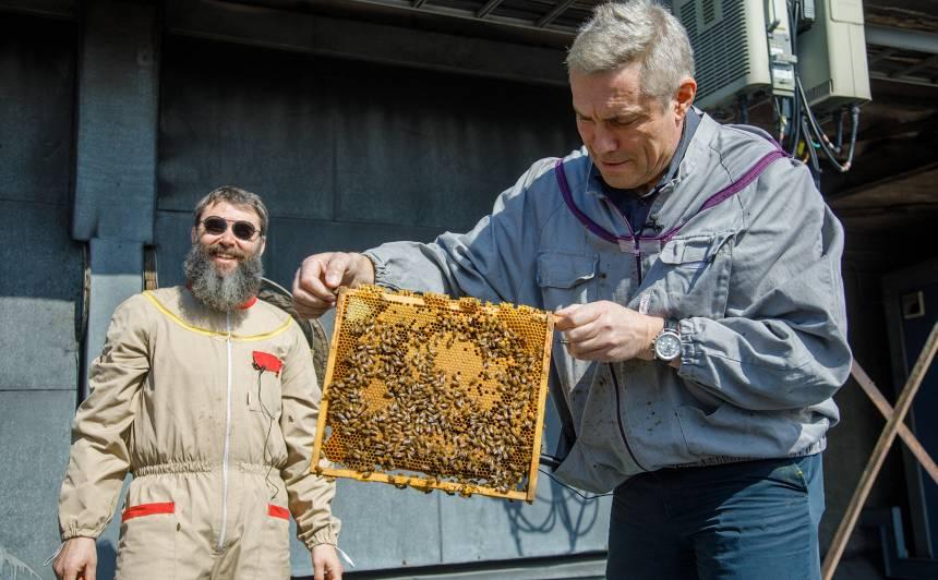 FOTO: <strong>Uz Dailes teātra jumta top bišu dārzs</strong> — drīz būs pašiem savs medus!