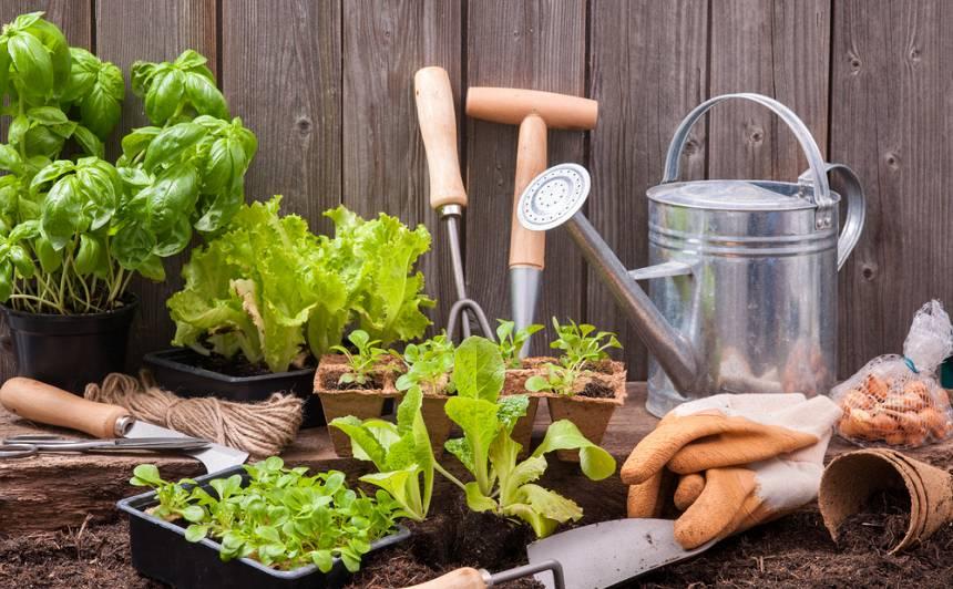 <strong>Ducis iesācēja jautājumu</strong> par garšaugu dārziņu