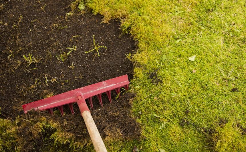 Sūna dārzā — <strong>nīdēt vai sadzīvot?</strong>