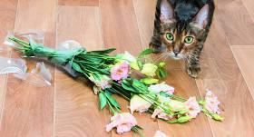 Vai kaķi <strong>jūtas vainīgi?</strong>