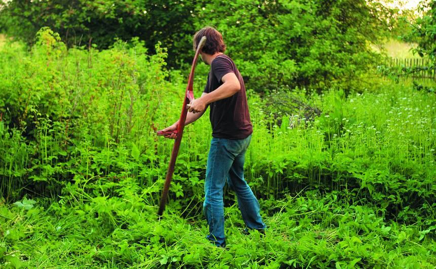 <strong>Mans aizaugušais dārzs —</strong> 5 soļu sakopšanas plāns