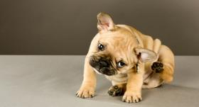 Ieviesti grozījumi <strong>mājdzīvnieku reģistrācijas noteikumos</strong>