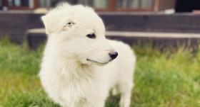 Horeogrāfe Liene Grava <strong>suņu puiku nosauc slavena komponista vārdā</strong>