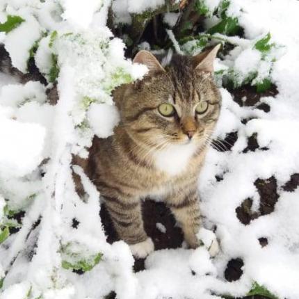 FOTO: Sniega sega maijā — <strong>Latvijas ziemeļaustrumos dārzi un pilsētas slīgst kupenās</strong>
