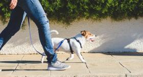 Pieejamākais un lētākais treniņš: <strong>ātra iešana. Kā to darīt pareizi?</strong>