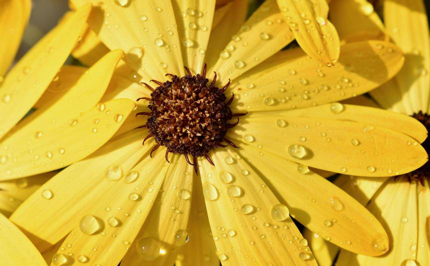 <strong>Nedēļas iesākumā gaidāms lietus,</strong> Latgalē iespējams pērkona negaiss