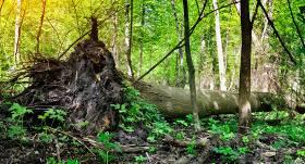 <strong>Kam pieder</strong> uz manas zemes uzkritušie koki?
