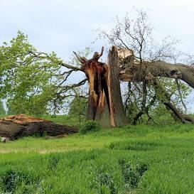 <strong>Sestdien vējš gāzīs kokus;</strong> nākamnedēļ kļūs nedaudz siltāks