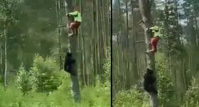 VIDEO: Autovadītājus pārsteidz skats ceļmalā — <strong>lācis rāpjas kokā pakaļ cilvēkam</strong>