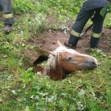 Daugavpils novadā ugunsdzēsēji <strong>izglābj bedrē iekritušu zirgu</strong>