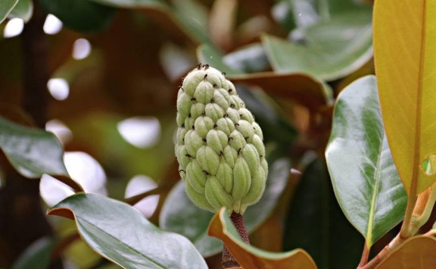 Gumijkoka zieds