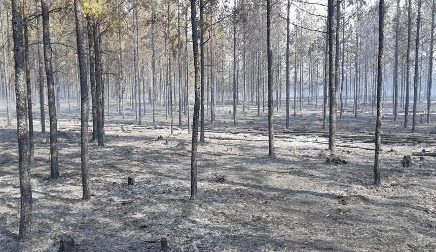 Izdegušais mežs Garkalnē