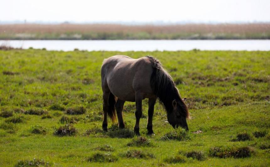 Savvaļas zirgs dabas parkā.