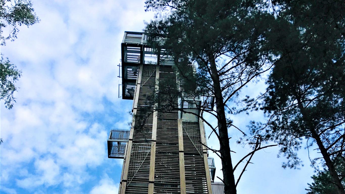 Dzintaru mežaparka skatu tornis
